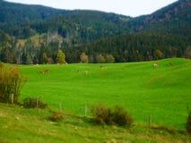 Εικόνα μετατόπισης κλίσης του τοπίου φθινοπώρου με το λιβάδι και τις αγελάδες στοκ φωτογραφία με δικαίωμα ελεύθερης χρήσης