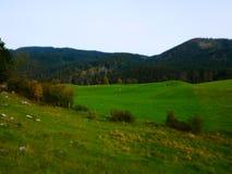 Εικόνα μετατόπισης κλίσης του τοπίου φθινοπώρου με το λιβάδι και τις αγελάδες στοκ φωτογραφία
