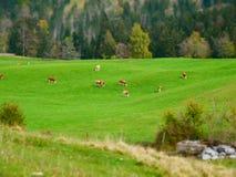 Εικόνα μετατόπισης κλίσης του τοπίου φθινοπώρου με το λιβάδι και τις αγελάδες στοκ φωτογραφίες