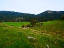 Εικόνα μετατόπισης κλίσης του τοπίου φθινοπώρου με το λιβάδι και τις αγελάδες στοκ εικόνα