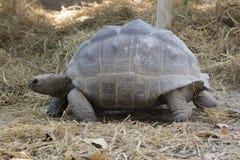 Εικόνα μιας χελώνας στο έδαφος άγρια περιοχές ζώων Στοκ εικόνα με δικαίωμα ελεύθερης χρήσης