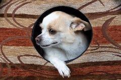 Εικόνα να λείψει του κουταβιού στο σκυλόσπιτο Στοκ Φωτογραφία