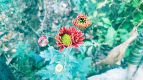 Εικόνα λουλουδιών για την κινητή ταπετσαρία Στοκ Φωτογραφία