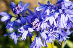 εικόνα λουλουδιών κουδουνιών grunge Στοκ εικόνα με δικαίωμα ελεύθερης χρήσης