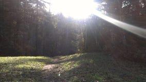 Εικόνα πάρκων Στοκ Εικόνες