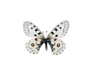 εικόνα πεταλούδων Στοκ Φωτογραφίες