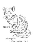 Εικόνα στη χρήση στις συσκευασίες, τα κιβώτια ή τα μπουκάλια του σαμπουάν για τις γάτες Στοκ εικόνες με δικαίωμα ελεύθερης χρήσης