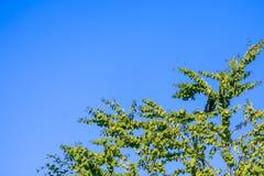 Εικόνα ταπετσαριών Στοκ φωτογραφία με δικαίωμα ελεύθερης χρήσης
