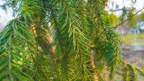 Εικόνα της λεπτομέρειας δέντρων ` την πρώιμη άνοιξη Στοκ φωτογραφία με δικαίωμα ελεύθερης χρήσης