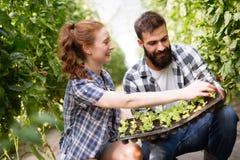 Εικόνα του ζεύγους των νεαρών βλαστών σποροφύτων αγροτών στον κήπο στοκ εικόνα με δικαίωμα ελεύθερης χρήσης