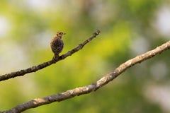 Εικόνα του πουλιού στο υπόβαθρο φύσης άγρια περιοχές ζώων Στοκ εικόνα με δικαίωμα ελεύθερης χρήσης
