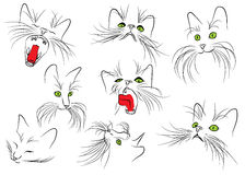 Εικόνα του ρύγχους γατών με τα μακριά μουστάκια στη λευκιά ΤΣΕ Στοκ Φωτογραφία