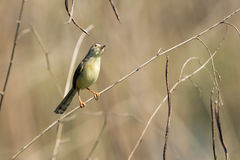 Εικόνα των πουλιών στον κλάδο άγρια περιοχές ζώων Στοκ Φωτογραφία