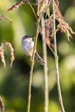 Εικόνα των πουλιών στον κλάδο άγρια περιοχές ζώων Στοκ φωτογραφίες με δικαίωμα ελεύθερης χρήσης