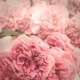 Εικόνα των ρομαντικών ρόδινων τριαντάφυλλων, εκλεκτής ποιότητας τυποποιημένος με την επίδραση μεταλλινών στοκ φωτογραφίες