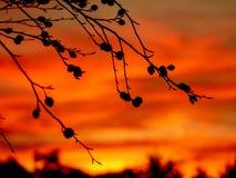Εικόνα των σκιαγραφιών beechnuts κατά τη διάρκεια του ηλιοβασιλέματος στοκ εικόνες