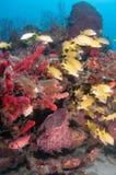 Εικόνα των ψαριών σε έναν σκόπελο στη νότια Φλώριδα Στοκ Φωτογραφία