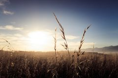 Εικόνα υποβάθρου έμπνευσης ενός τομέα καλλιέργειας ως ανόδους ήλιων στοκ φωτογραφία