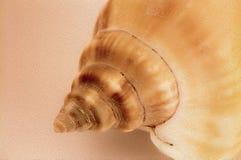 Εικόνα υποβάθρου κινηματογραφήσεων σε πρώτο πλάνο κοχυλιών θάλασσας στοκ εικόνα