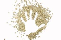 Εικόνα χεριών φιαγμένη επάνω από άψητα φασόλια καφέ, που απομονώνονται στο άσπρο υπόβαθρο Στοκ εικόνες με δικαίωμα ελεύθερης χρήσης