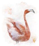 Εικόνα Watercolor του πουλιού φλαμίγκο απεικόνιση αποθεμάτων
