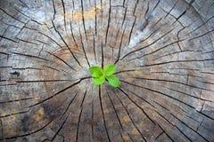 εικόνες οικολογίας έννοιας πολύ περισσότεροι το χαρτοφυλάκιό μου Ο νεαρός βλαστός αύξησης του παλαιού ξύλου και συμβολίζει την πρ στοκ εικόνες