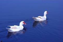 εικόνες πουλιών Στοκ φωτογραφίες με δικαίωμα ελεύθερης χρήσης