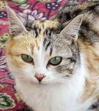 Εικόνες της γάτας που κοιτάζει στις διαφορετικές κατευθύνσεις, γάτα που περιμένουν το θήραμα, μάτια γατών, στοκ φωτογραφίες