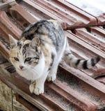 Εικόνες της γάτας που κοιτάζει στις διαφορετικές κατευθύνσεις, γάτα που περιμένουν το θήραμα, μάτια γατών, στοκ εικόνα