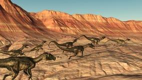 Δεινόσαυροι Ornitholestes στο τρέξιμο ερήμων Στοκ Εικόνα