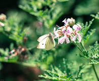 ειρήνη κήπων Στοκ φωτογραφία με δικαίωμα ελεύθερης χρήσης