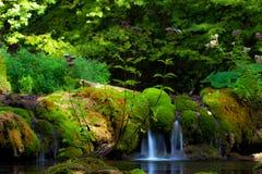 Ειρηνικά ρέοντας φύλλωμα ρευμάτων και φθινοπώρου Στοκ Φωτογραφίες