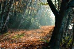 Ειρηνικές ακτίνες του φωτός μέσω των δέντρων Στοκ φωτογραφίες με δικαίωμα ελεύθερης χρήσης