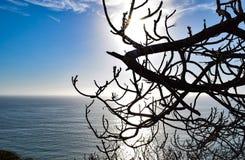 Ειρηνική άποψη μέσω ενός δέντρου πεύκων ατονίας Torrey Στοκ φωτογραφία με δικαίωμα ελεύθερης χρήσης