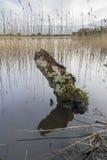 Ειρηνική λίμνη σύνδεσης με τις αντανακλάσεις καλάμων Στοκ φωτογραφίες με δικαίωμα ελεύθερης χρήσης