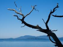 Ειρηνική ακτή στο πολιτεία της Washington, ΗΠΑ Στοκ φωτογραφίες με δικαίωμα ελεύθερης χρήσης