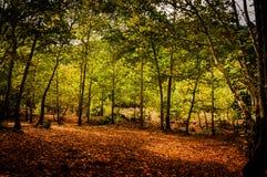 Ειρηνική δασώδης περιοχή Στοκ Εικόνες