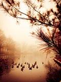Ειρηνική λίμνη Στοκ φωτογραφία με δικαίωμα ελεύθερης χρήσης