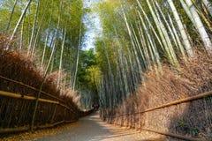 Ειρηνική πορεία μέσω του δάσους μπαμπού Arashiyama στο Κιότο, Ιαπωνία Στοκ Φωτογραφία