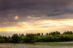 Ειρηνική σκηνή φύσης με τη χλόη στο πρώτο πλάνο και το βράδυ s Στοκ φωτογραφίες με δικαίωμα ελεύθερης χρήσης
