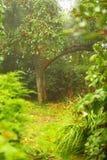 Ειρηνικοί κήπος και πορεία. Δέντρο της Apple στο υπόβαθρο Στοκ φωτογραφία με δικαίωμα ελεύθερης χρήσης