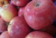 Ειρηνικός αυξήθηκε Apple Στοκ Φωτογραφία