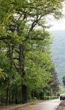 Ειρηνικός δρόμος με τα δέντρα άνοιξη στοκ εικόνα με δικαίωμα ελεύθερης χρήσης