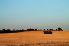 Ειρηνικός χρυσός τομέας στο ηλιοβασίλεμα στην αγροτική Αγγλία στοκ φωτογραφία