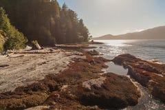 Ειρηνικός Ωκεανός, Καναδάς στοκ φωτογραφία
