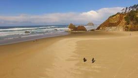 Ειρηνικός Ωκεανός παραλιών ακτών του Όρεγκον σκυλιών περπατήματος ζεύγους φιλμ μικρού μήκους