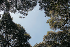 Ειρηνικό δέντρο Στοκ φωτογραφία με δικαίωμα ελεύθερης χρήσης
