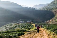 Ειρηνικό αγρόκτημα τσαγιού στοκ φωτογραφία με δικαίωμα ελεύθερης χρήσης