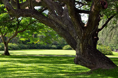 ειρηνικό δέντρο Στοκ Φωτογραφίες