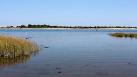 Ειρηνικό νερό riverbank που ρέει ήπια με τους περιστασιακούς κυματισμούς στο νερό Φωτεινός μπλε ουρανός σε έναν ποταμό ή μια εκβο φιλμ μικρού μήκους